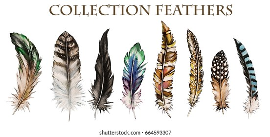 Watercolor collection of feathers. Illustration Isolated on white background. Feathers of different birds for decoration