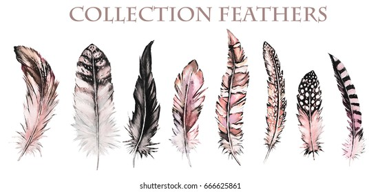 Watercolor collection of feathers. Illustration Isolated on white background. pink Feathers of different birds for decoration