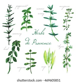 Watercolor collection of herbs de Provence. Rosemary, basil, thyme, sage, peppermint, summer savory, marjoram, oregano elements.  Usable for textile, paper, wrapping