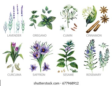 Watercolor collection of herbs and spices isolated on white background