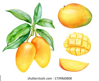 Watercolor collection of mango fruits isolated on white background