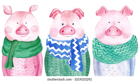 Watercolor collection of Pigs in sweater. 2019 Chinese New Year of the Pig. Christmas greeting card