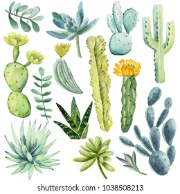 Watercolor collection with succulents plants,cactus,flowering cactus. Natural watercolor design elements, isolated on white background. Perfect for your unique design,logo,patterns.