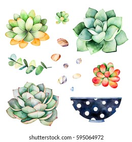 Watercolor collection with succulents plants,pebble stones, branche,painted pot.Handpainted iclipart isolated on white background.World of succulent and cactus collction.Perfect for your unique design