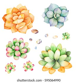 Watercolor collection with succulents plants,pebble stones.Handpainted iclipart isolated on white background.World of succulent and cactus collction.Perfect for your unique design,logo,patterns etc