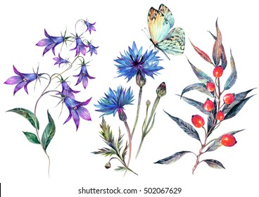 Watercolor collection of summer wildflowers. Isolated meadow field flowers: bluebells, cornflowers, hawthorn branch and butterfly. Vintage botanical illustration. Floral decoration in natural style.