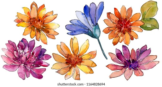 Watercolor colorful african daisy flower. Floral botanical flower. Isolated illustration element. Aquarelle wildflower for background, texture, wrapper pattern, frame or border.
