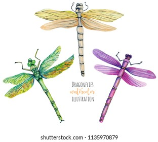 Watercolor colorful dragonflies illustration, hand painted isolated on a white background