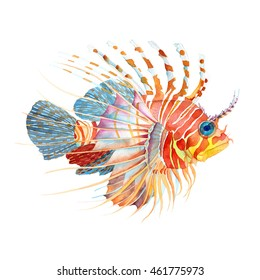 Watercolor colorful Lion fish isolated on white. Hand Drawn
