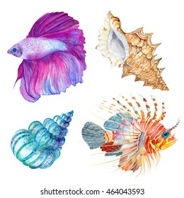 Watercolor colorful set fish and shells. Hand drawn. Lion fish, Betta splendens fish