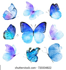 Watercolor composition of blue butterflies , isolated on white