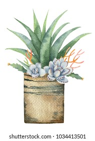 Watercolor composition of cacti and succulents in a pot isolated on white background. Flower illustration for your projects, greeting cards and invitations.
