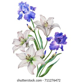 Watercolor composition of flowers, hand drawn floral illustration, postcard with white lilies and blue irises isolated on a white background.