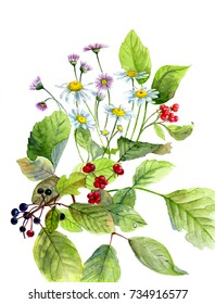 Watercolor composition of flowers and wild berries, and green leaves