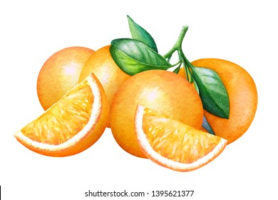 Watercolor composition with oranges on white background.