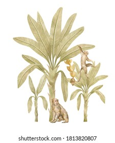 Watercolor composition with tropical monkey and palm trees. Banana palm, capuchin. Gently  background with wildlife jungle elements. Aesthetic vintage poster, print, card