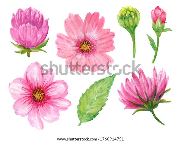 Watercolor country forest wild flower cosmos gerbera daisy composition element Floral Bouquethand painting