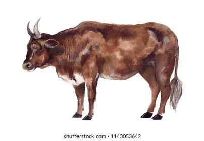 Watercolor cow on the white background. Farm animals
