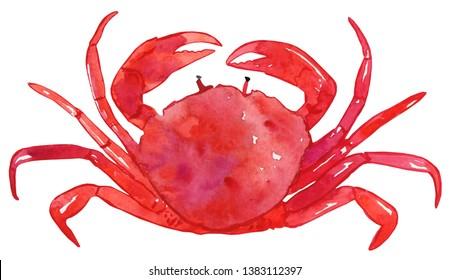 Watercolor Crab Illustration, Crab Clipart