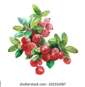 Watercolor cranberry food isolated on a white background illustration.