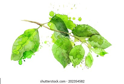 Watercolor creative green leaves branch with aquarel splash and stain