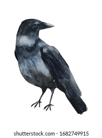 Watercolor Crow Illustration - Isolated crow on a white background - Ready to be printed 8x10 inches