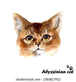Watercolor cute abyssinian cat on the white background