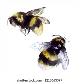 Watercolor cute bees on the white background