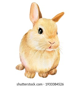 Watercolor cute bunny on an isolated white background