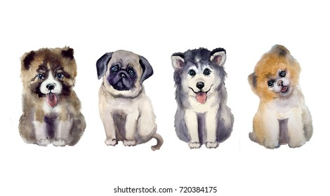Watercolor cute dog on the white background