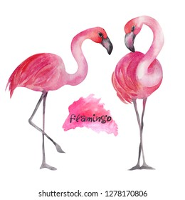 Watercolor cute flamingo on a white background