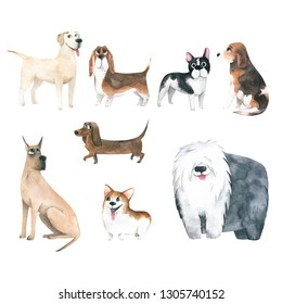 Watercolor cute funny dogs.  Illustration