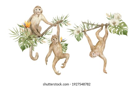 Watercolor cute monkeys and floral tropical bouquets. Exotic tropical animals, monkeys on the tree and plants, flowers.