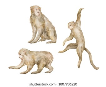 Watercolor cute monkeys isloated on white. Hand drawn illustration with primate animals. Tropical wildlife. Ape, chimpanze character, for textile, wallpaper, poster
