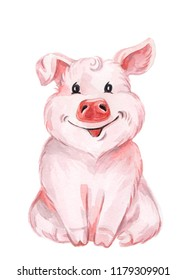 Watercolor cute pig. Color illustration isolated