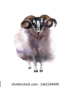 Watercolor cute sheep on the white background
