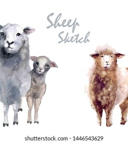 Watercolor cute sheeps. Farm animals illustrations. Happy eid aladha!