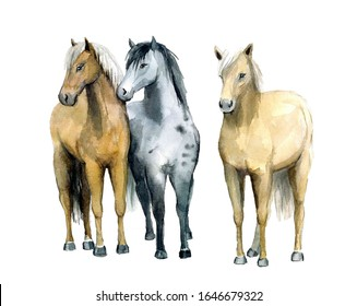 Watercolor cute thee horses on the white background.Animal watercolor silhouette sketch. Hand draw art illustration.Graphic for fabric,tee-shirt, postcard, greeting card, book, poster, sticker