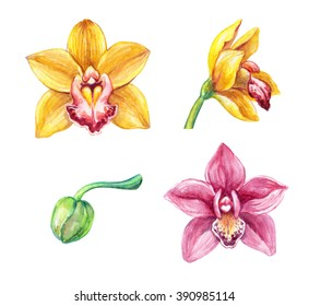 watercolor cymbidium orchids, tropical flowers clip art, illustration of assorted flowers isolated on white background