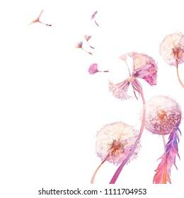 Watercolor dandelion illustration. Blowballs on white background. Hand painted card design.