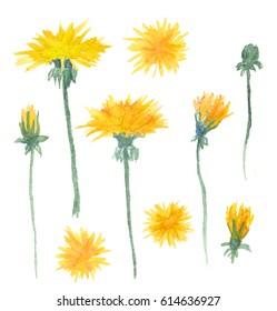 Watercolor dandelions flowers set