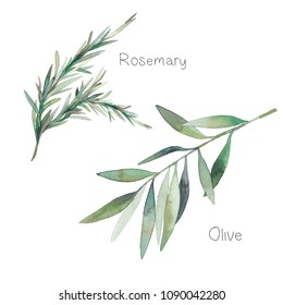 Watercolor decorative herbs set. Hand painted botanical elements: rosemary leaves and olive branch. Natural objects isolated on white background
