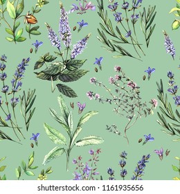Watercolor decorative pattern with fragrant herbs