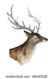 Watercolor deer Painting. Hand painted realistic illustration isolated on white background. Realistic forest animal art.