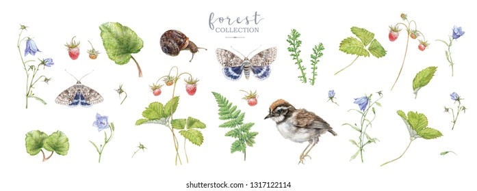 Watercolor detailed elements set with forest plants, bell flowers, butterflies, strawberry and bird isolated on white background. Botanical design for cosmetics, spa, perfume, beauty care, wedding