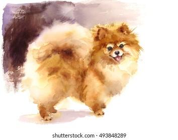 Watercolor Dog Pomeranian Portrait Hand Painted Cute Animals Pets Illustration
