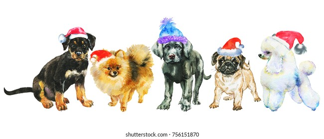 bcb3696d62a6e Watercolor dogs in Christmas hats. Painting New year banner on white  background. Hand drawn