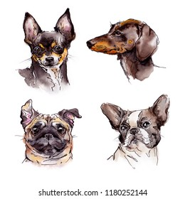 Watercolor dogs set with chihuahua, pug, french bulldog and dachchund
