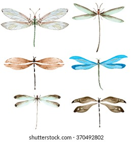 watercolor dragonflies set on a white background