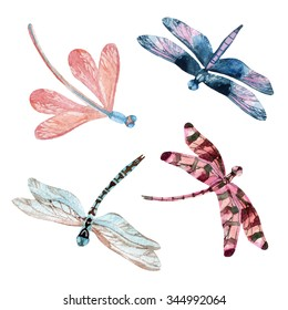 Watercolor dragonfly set isolated on white background. Hand painted illustration